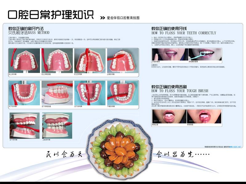 日常护理口腔挂图——贝氏刷牙法 牙线 舌刷挂图