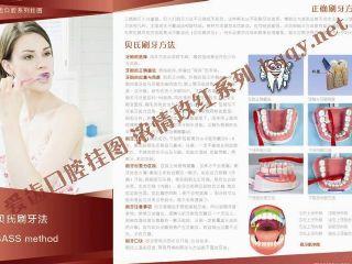 爱齿玫红口腔挂图——贝氏刷牙方法