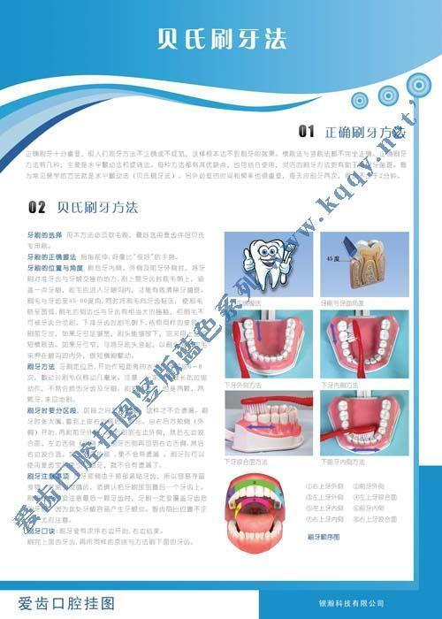 爱齿竖版蓝色系列口腔挂图——贝氏刷牙方法